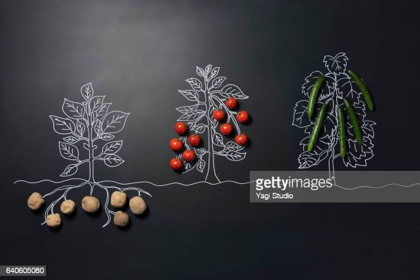 Potatoes and tomatoes and cucumbers