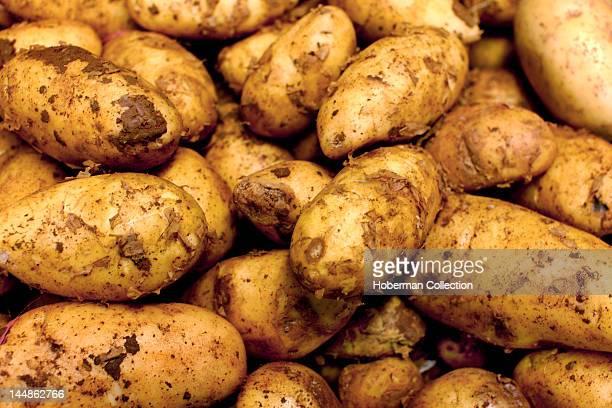 Potatoes, Burough Market, London
