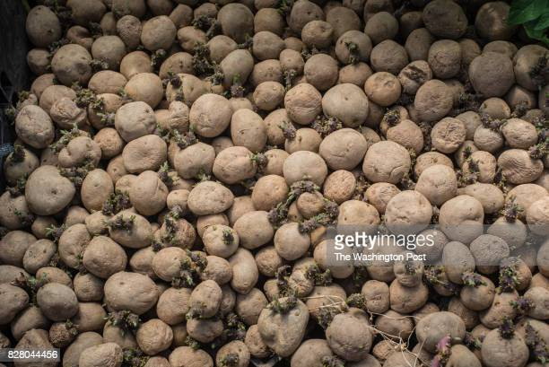 Potatoes grown on the farm and ready for sale The Willowsford development incorporates open space and agribusiness with suburban living As people...
