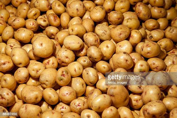 potatoes, iceland - raw potato stock pictures, royalty-free photos & images