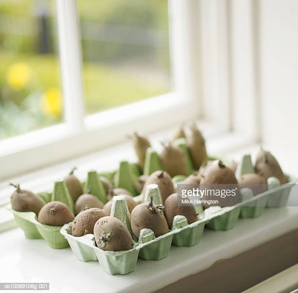 Potatoes in egg carton