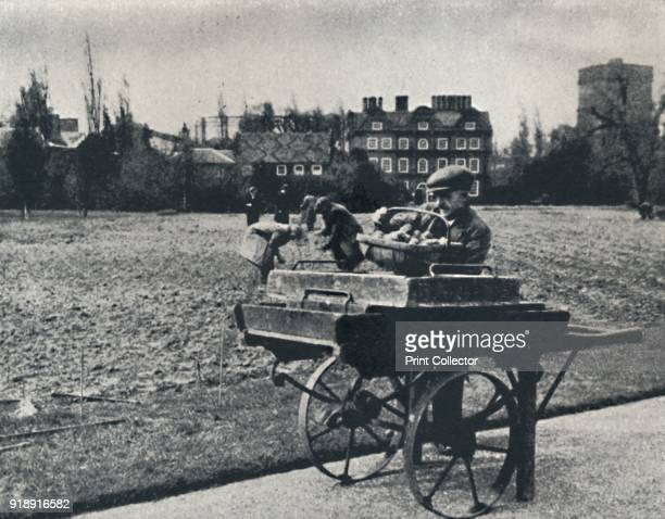 'Potatoes in Kew Gardens' 1941The grounds of Kew Gardens are made over to growing potatoes From Air of Glory by Cecil Beaton [His Majesty's...