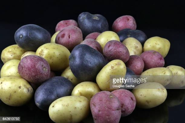 Potatoes of different colors and varieties (Solanum tuberosum)