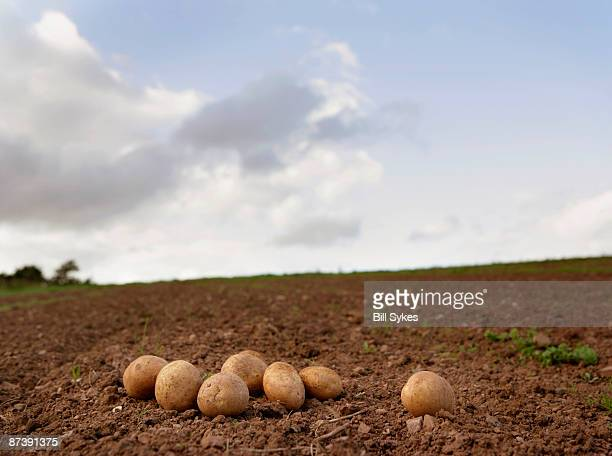 potatoes on ground - rauwe aardappel stockfoto's en -beelden