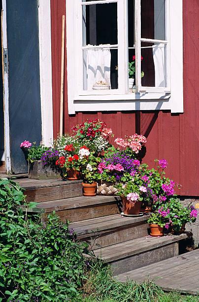 Pot-plants on steps in front of a cottage Prolog Stockholm archipelago Sweden.