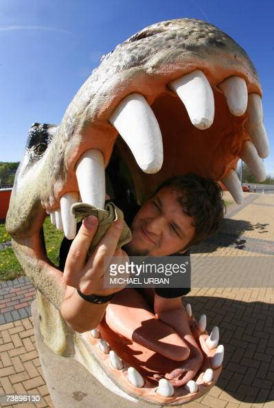 A man cleans the teeth of a dinosaur sculpture in front of