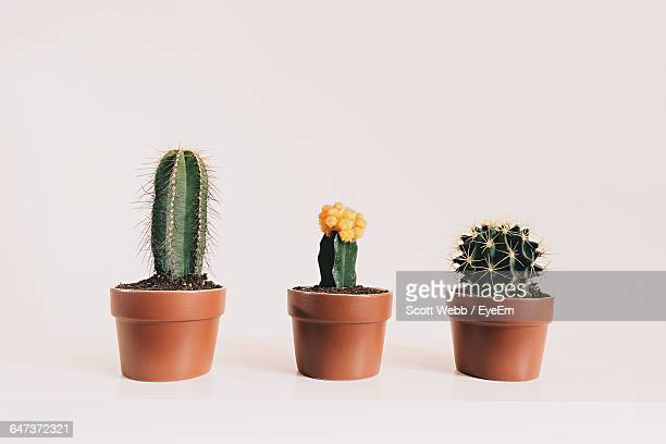 potted cactus against white background - cactus fotografías e imágenes de stock