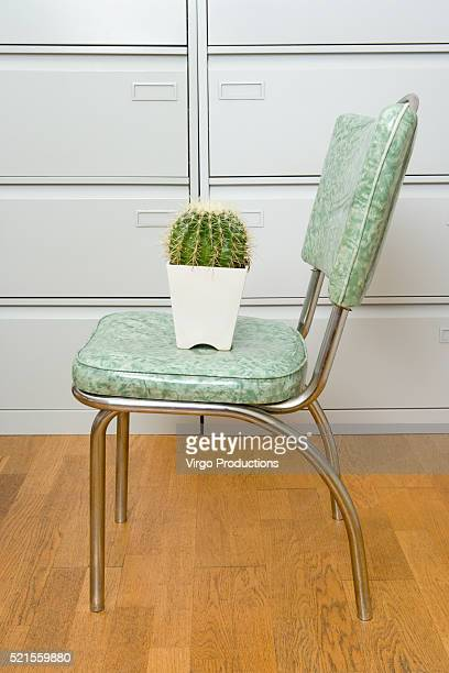 Potted Cactus on Chair