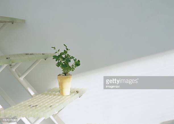 potted flat-leaf parsley on stairs - flat leaf parsley stock photos and pictures