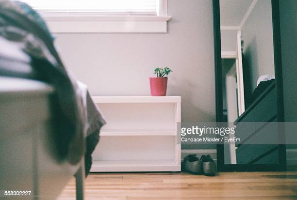Potted Flower On Shelf
