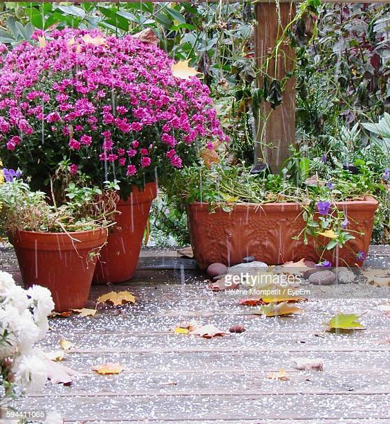 Potted Flowering Plants In Back Yard During Rainfall