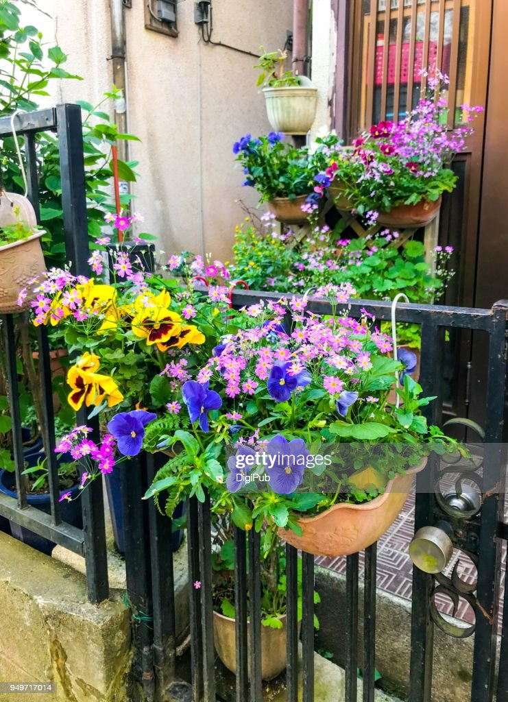 Potted Flowers In The Spring Stock Foto Getty Images