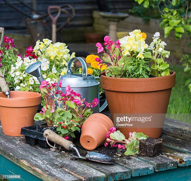 Potted flowers, watering can, tools on wood table