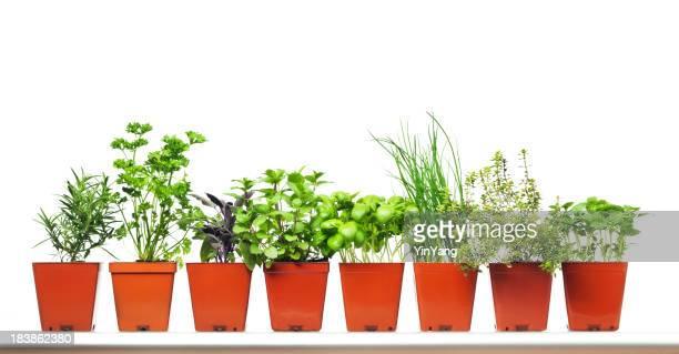 Rellenas jardín de hierbas en recipiente de plástico de compras sobre fondo blanco