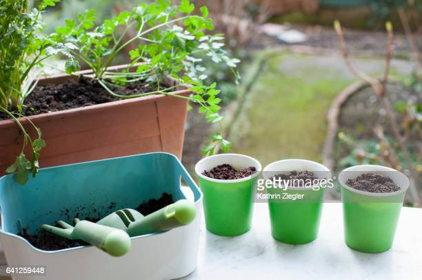 Potted herbs and cups filled with soil on windowsill