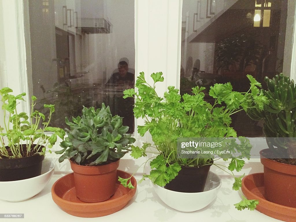 Potted Houseplants On Window Sill : Foto stock
