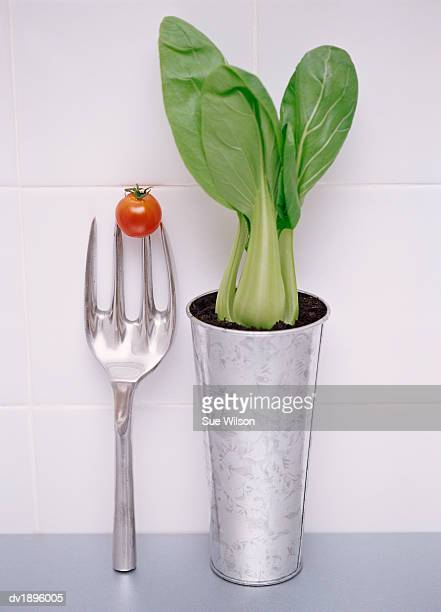 Potted Pak Choi and a Cherry Tomato on a Gardening Fork