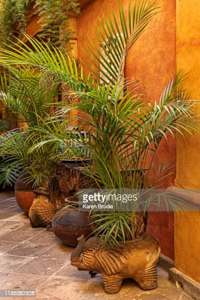 potted palms in entranceway - colonial stock pictures, royalty-free photos & images