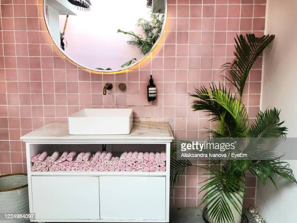 potted plant against  pink wall at home - toilet planter stock pictures, royalty-free photos & images