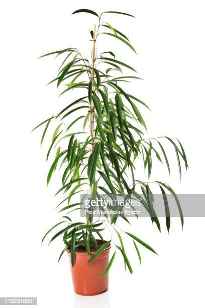 potted plant against white background - houseplant stock pictures, royalty-free photos & images