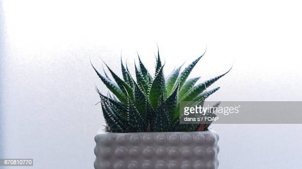 potted plant against white background - dana white stock pictures, royalty-free photos & images