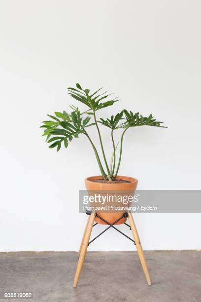 potted plant against white background - pot plant stock pictures, royalty-free photos & images