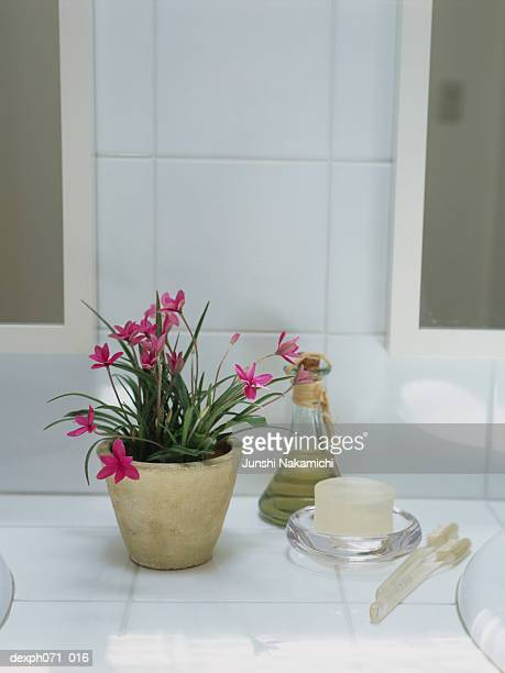 Potted plant and toiletries on bathroom sink area
