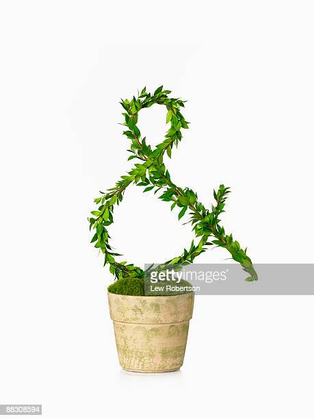 Potted plant as ampersand