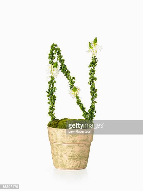 Potted plant as letter N