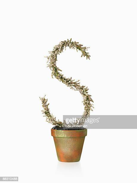 Potted plant as letter S