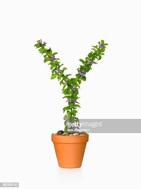 Potted plant as letter Y