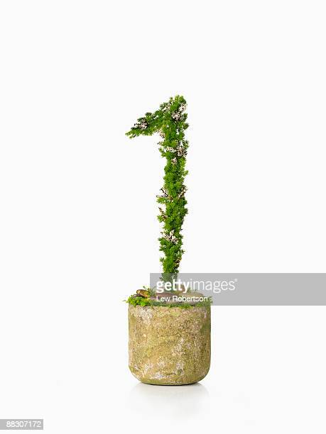 Potted plant as number one