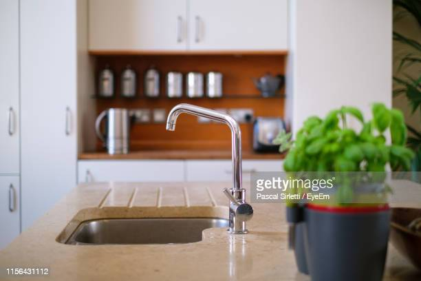 potted plant by sink on kitchen counter - kitchen sink stock pictures, royalty-free photos & images
