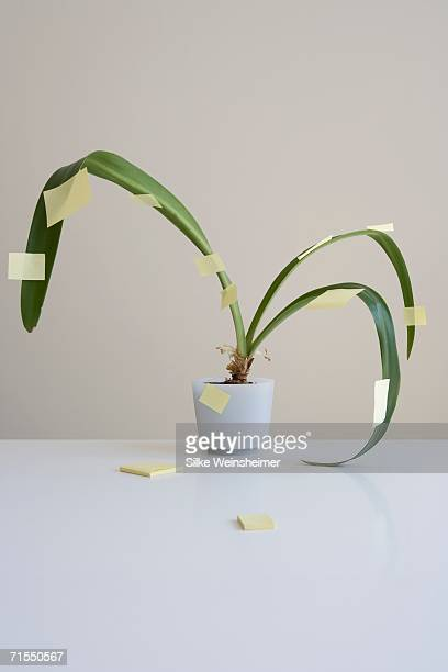 Potted plant covered in adhesive notes