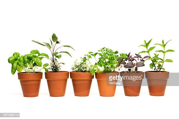 potted plant herb spice garden in spring flower pot containers - potted plant stock pictures, royalty-free photos & images
