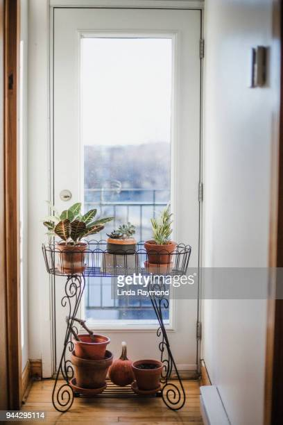 Potted plant in an apartment