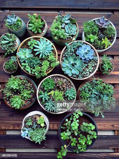 potted plant in garden - succulent stock pictures, royalty-free photos & images