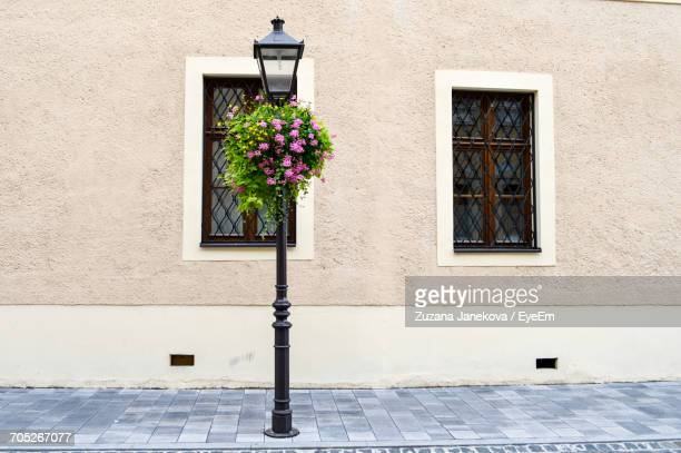 potted plant in pot - zuzana janekova stock pictures, royalty-free photos & images