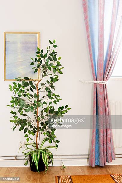 Potted plant in room