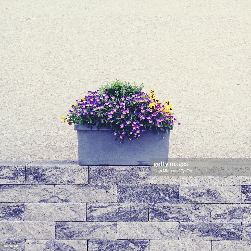 Potted Plant On Brick Wall : Foto stock