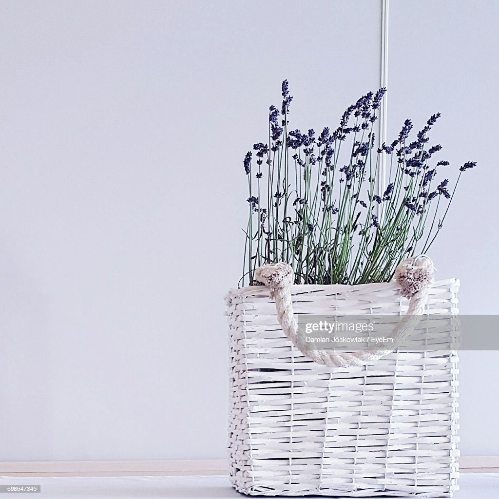 Potted Plant On Floor Against White Wall At Home : Stock Photo