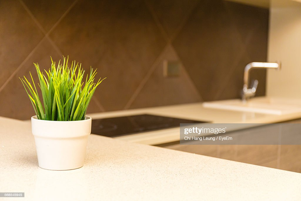 Potted Plant On Kitchen Worktop : Stock Photo
