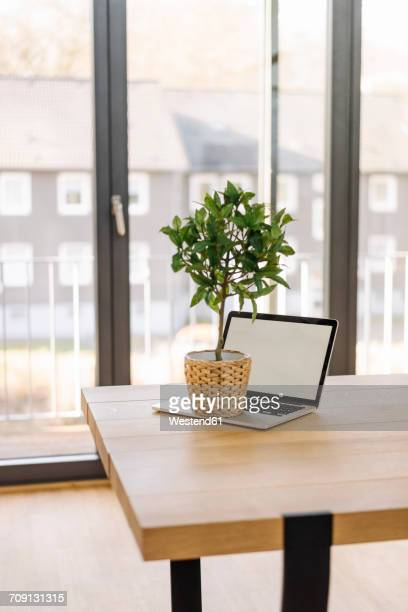 Potted plant on laptop on table