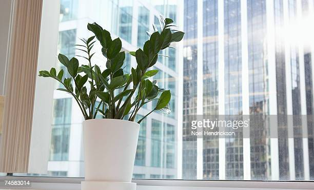 Potted plant on office window sill, low angle view