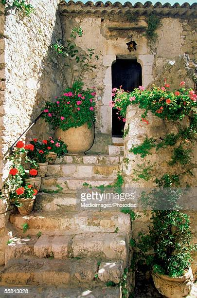 Potted plant on stairs, Eze, French Riviera, France