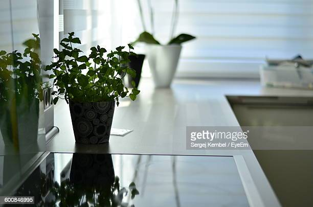 Potted Plant On Table By Window At Home