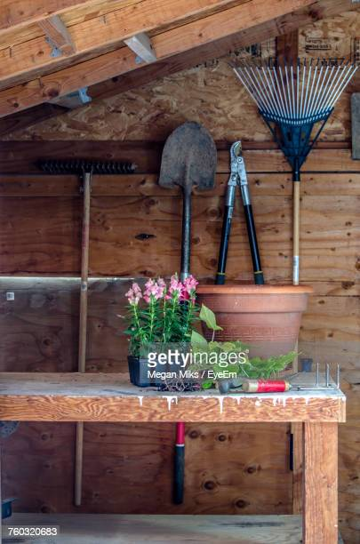 potted plant on table - shed stock pictures, royalty-free photos & images