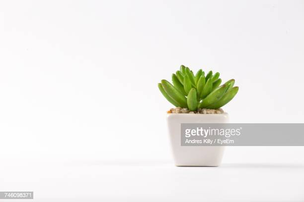potted plant on white background - pot plant stock pictures, royalty-free photos & images
