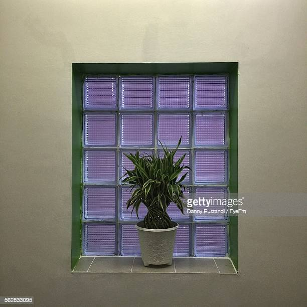 Potted Plant On Window Sill In Amaris Hotel