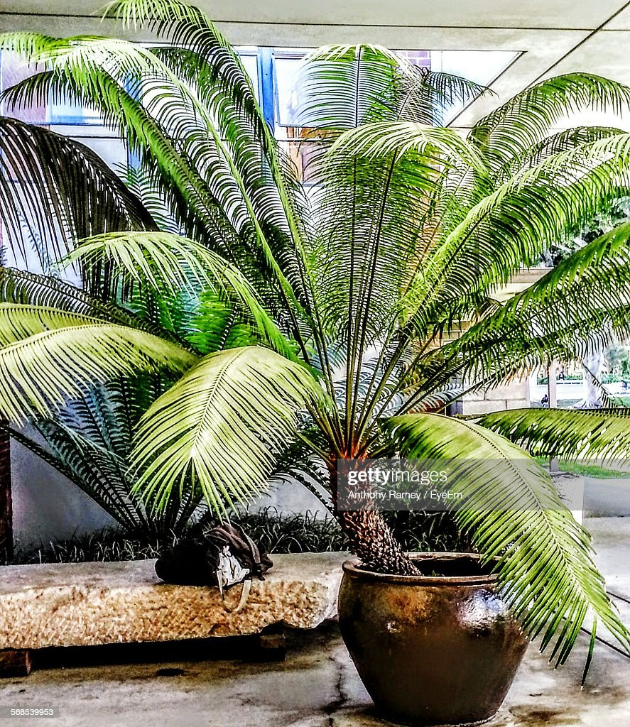 Potted Plant Outside Building : Stock Photo
